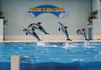 海の動物たちのショー