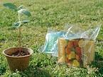 培養土と花の種をミニポットに詰め合わせた「ワンタッチ栽培セット」