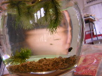 アトリエにある作品1金魚鉢