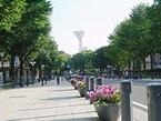 横浜カーフリーデー2005で道路封鎖される日本大通り
